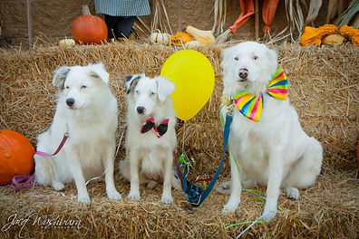 Fall festival puppies.jpg