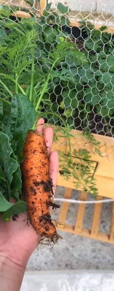 """""""Zanni"""", la zanahoria del huerto de Paola"""