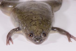 frog2.tif