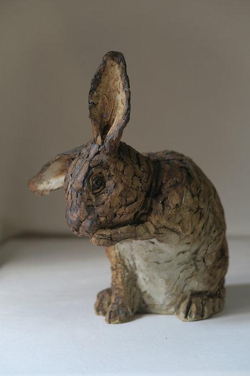 Rabbit with Skew Ear