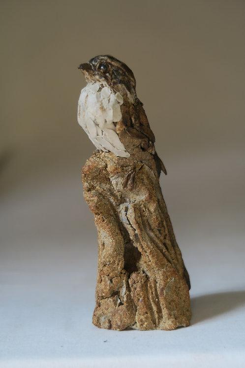 Tiny Swallow on Rock