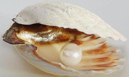Perle-.jpg