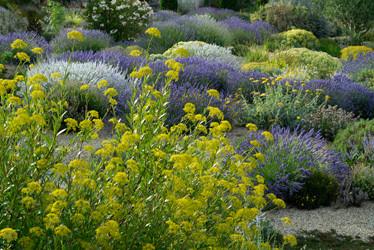 """Plantes de terrain sec : """"un jardin sans arrosage"""""""