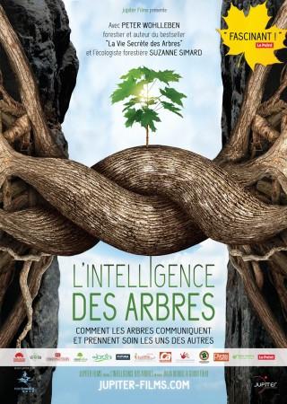 Sortie cinéma : L'intelligence des arbres