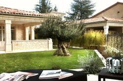 Plantation d'olivier agé de 300 ans