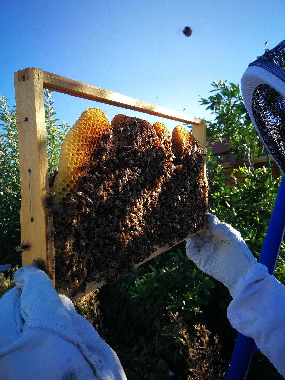 Beekeeping Coaching/Mentoring Sessions