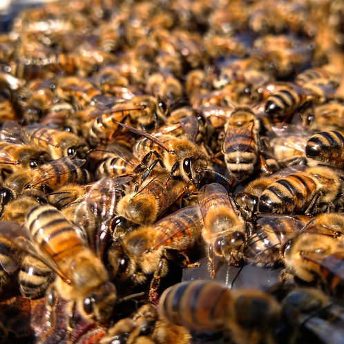 Swarm management course