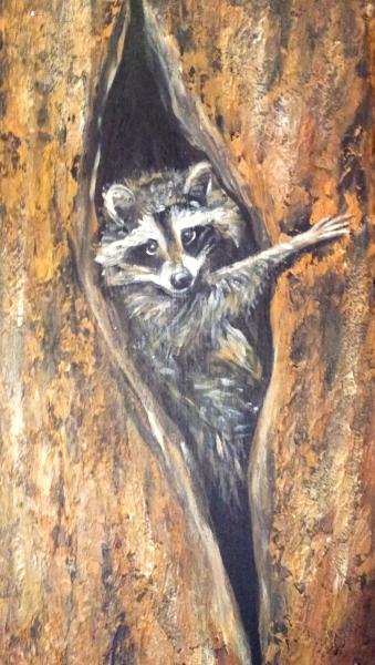 racoon_tree_pic_1577