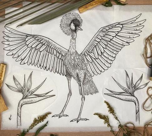 Grey crowned crane  Jan -2020