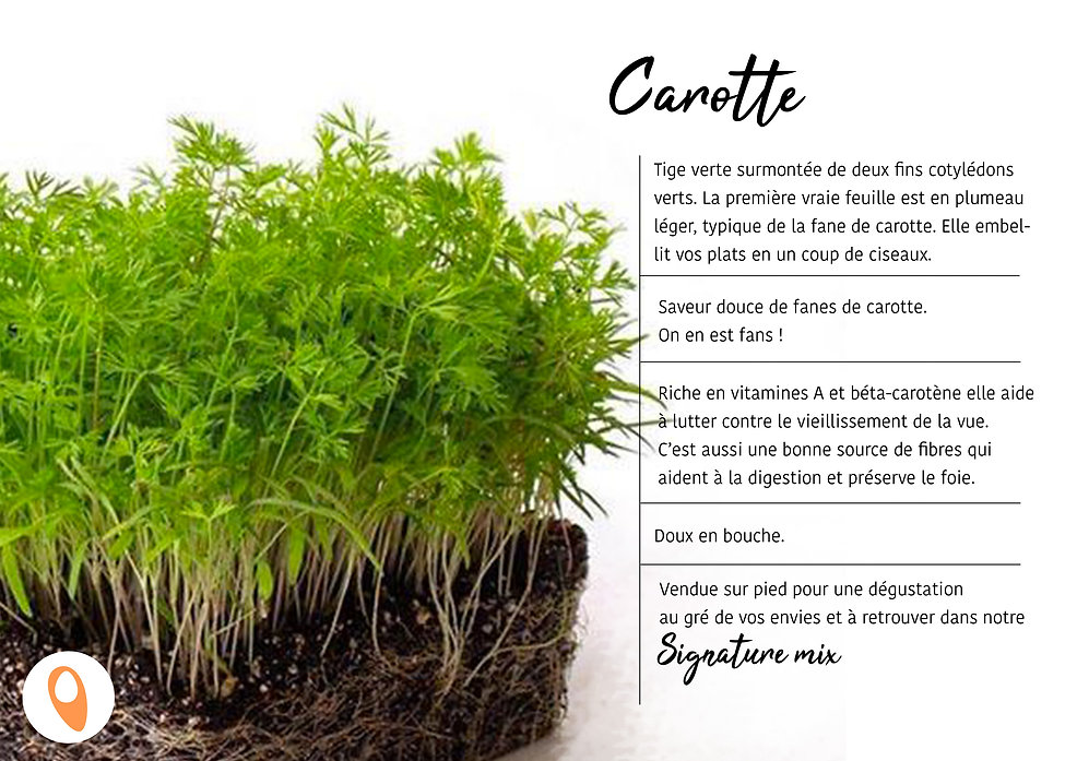06 Carotte.jpg