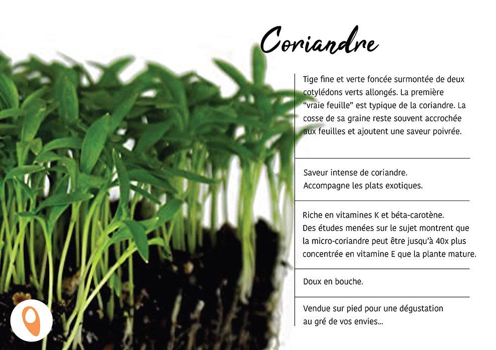09 Coriandre.jpg