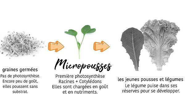 graine micro legumes.jpg