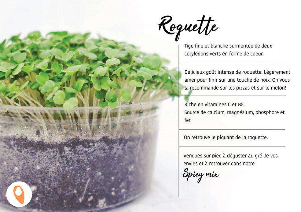 15 Roquette.jpg
