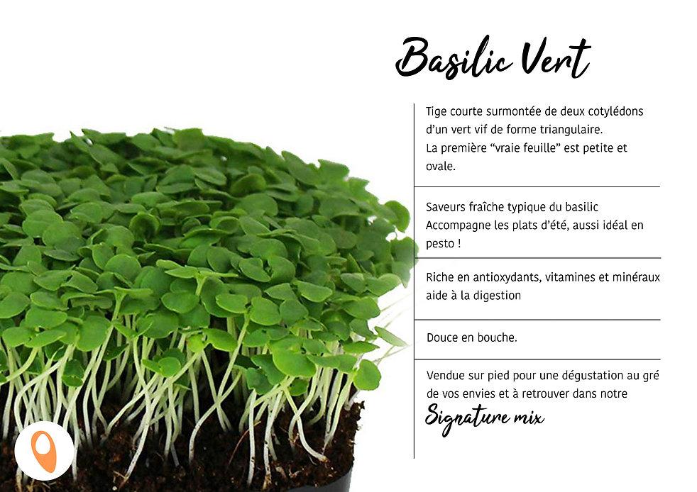 04 Basilic vert.jpg