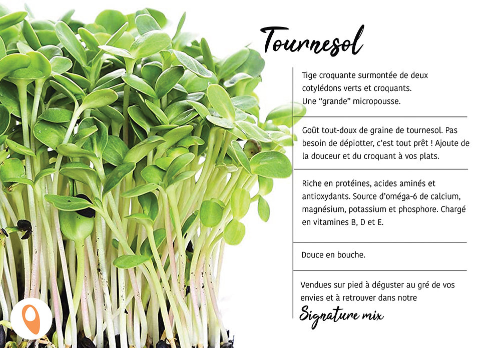 16 Tournesol.jpg