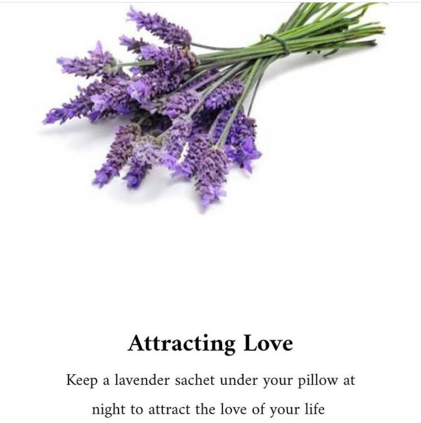 herbs-for-love-call-tarot-mamta-tarot-card-reading