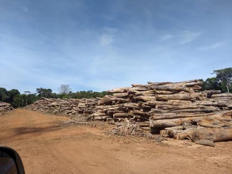 PF prende homem transportando madeira ilegal próximo a terra indígena em Vilhena