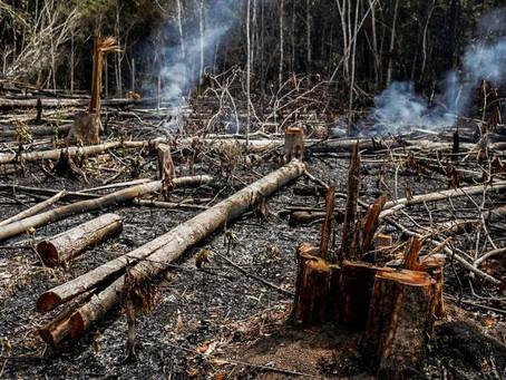 Os estados debatem o desmatamento. Qual é seu papel?