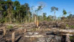 desmatamento-na-amazonia-aumenta-durante