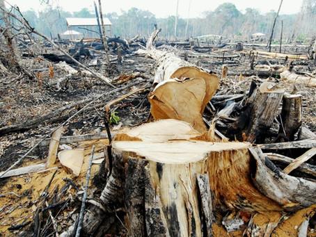 AGU obtém bloqueio de mais de R$ 302 milhões em bens de desmatadores da Amazônia
