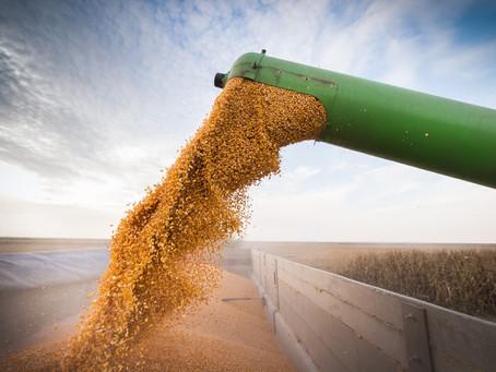 Início da colheita de milho confirma recorde de na produção total de grãos no Brasil