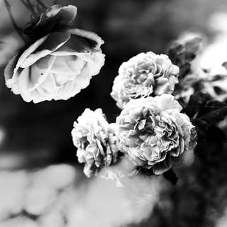 Photo by Lerr
