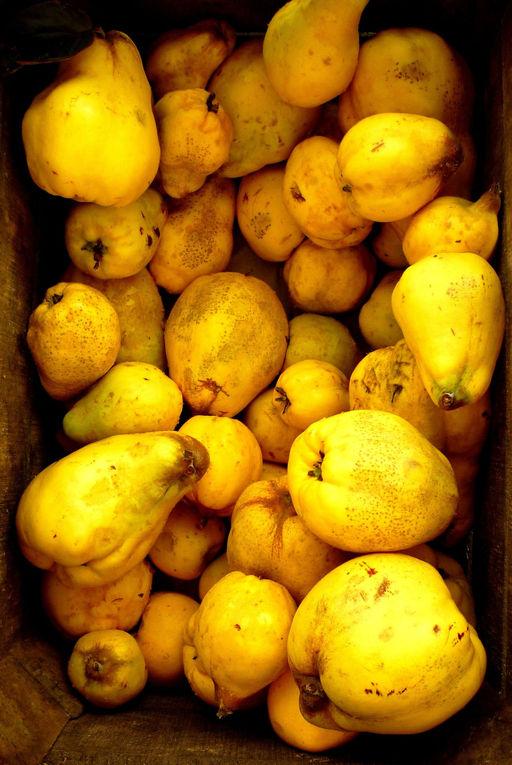 libre cueillette fruits et l gumes bio le jardin d 39 c t 22400 saint alban bretagne. Black Bedroom Furniture Sets. Home Design Ideas