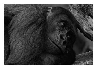 Animal kopie.jpg