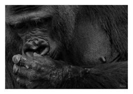 Animal 001 kopie.jpg
