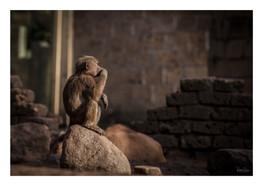 Animal 3 kopie.jpg