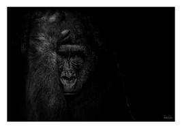 Animal 003 kopie.jpg