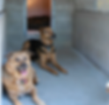 Dog and Cat Boarding Danville