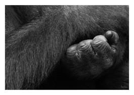 animal 1 kopie.jpg