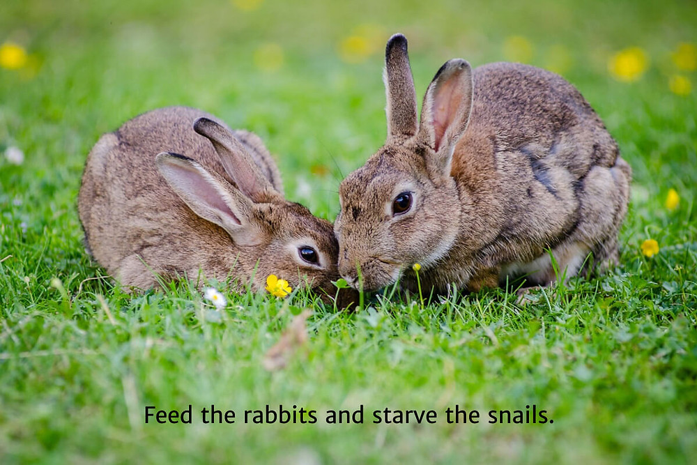 Strategy 1: Feed the rabbits and starve the snails.