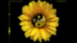 KASP Logo PNG.png