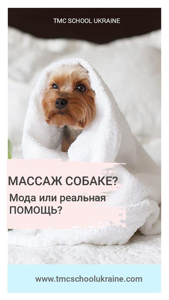 Как делать массаж собаке?Зачем делать массаж собаке?