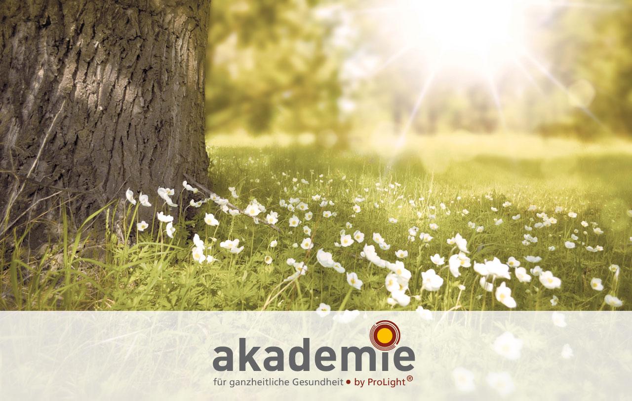spring_akademie