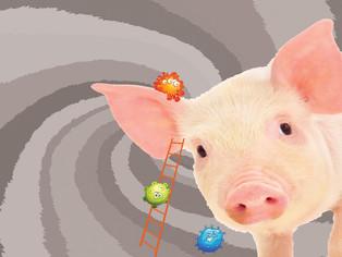 Rififi dans le porc canadien