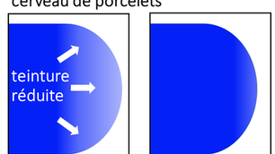 Premier cas canadien de pestivirus du porcelet