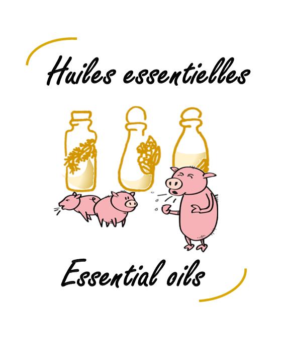Huiles essentielles: des molécules prometteuses pour contrer les infections respiratoires porcines