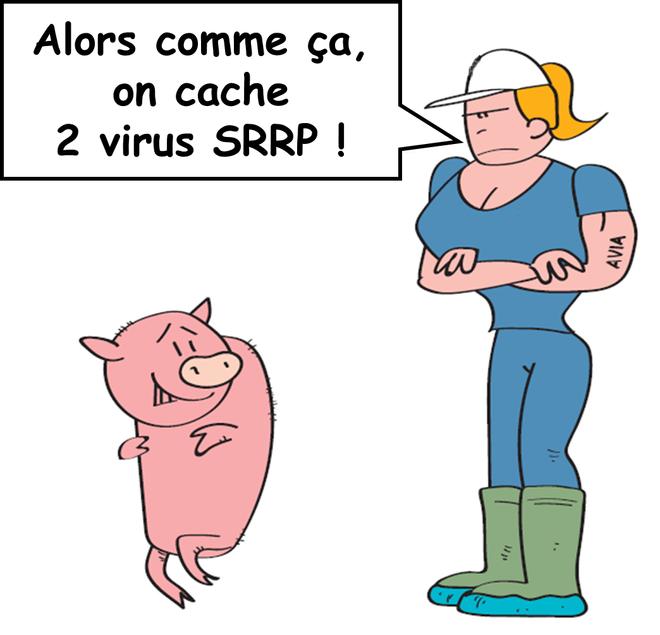 Utilisation d'une nouvelle technologie génomique pour lutter contre le virus du SRRP