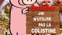 Diarrhée post-sevrage porcine : comment éviter la colistine
