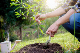 Rational Plants Trees to Help Deal Dealers Offset Carbon Footprint