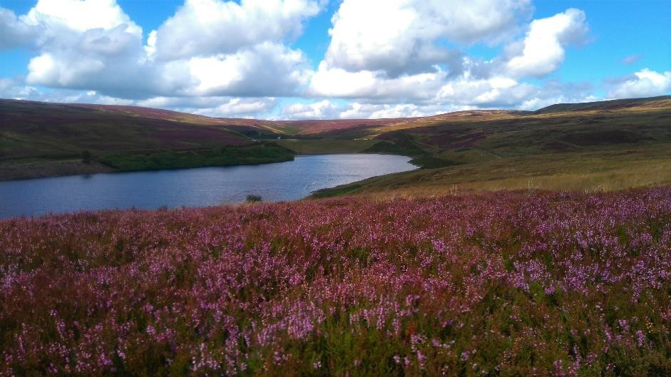 Walshaw and Lancashire Moor, West Yorkshire