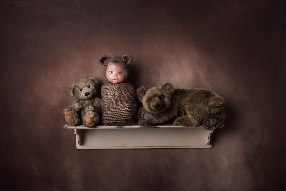 bear-shelf-2-download-Recovered.jpg