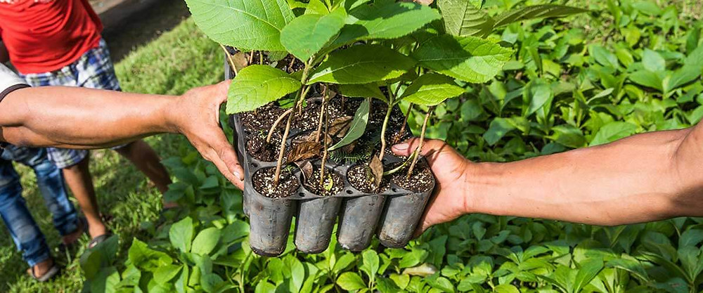 Someone is passing another person a box of saplings to plant. Giving a gift of a tree for mother's day is a great gift idea. Planting a tree for mom, so it can grow with her over the years.
