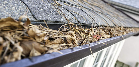 gutter-cleaning-clearwater.jpg