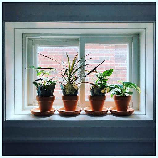 Four plants in a window