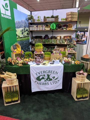 Evergreen Display