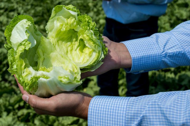 Lettuce Field Tour
